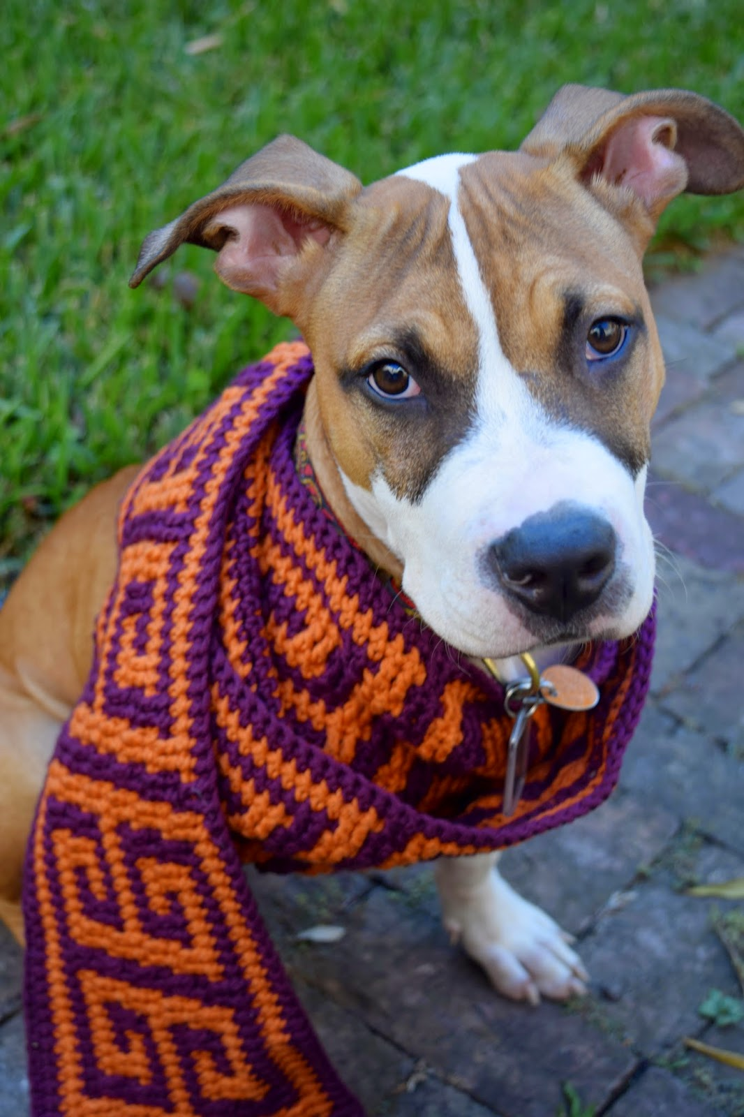 Dog wearing the square key scarf